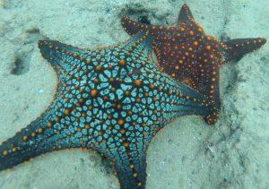 Starfish, Galápagos